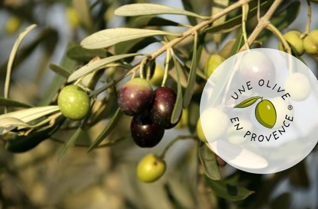 Ancien IRCE une olive en provence
