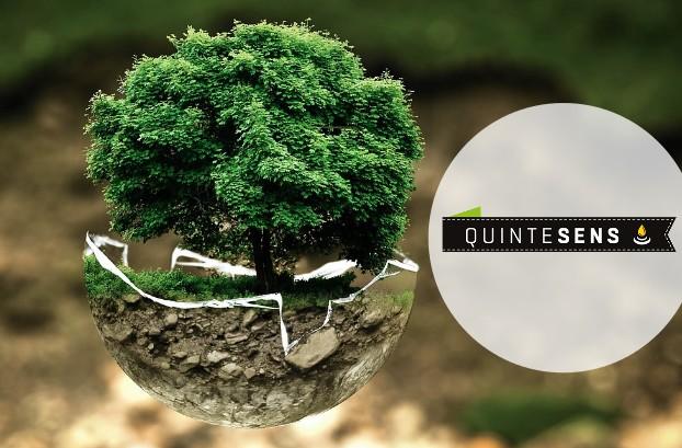 image-logo-quintesens